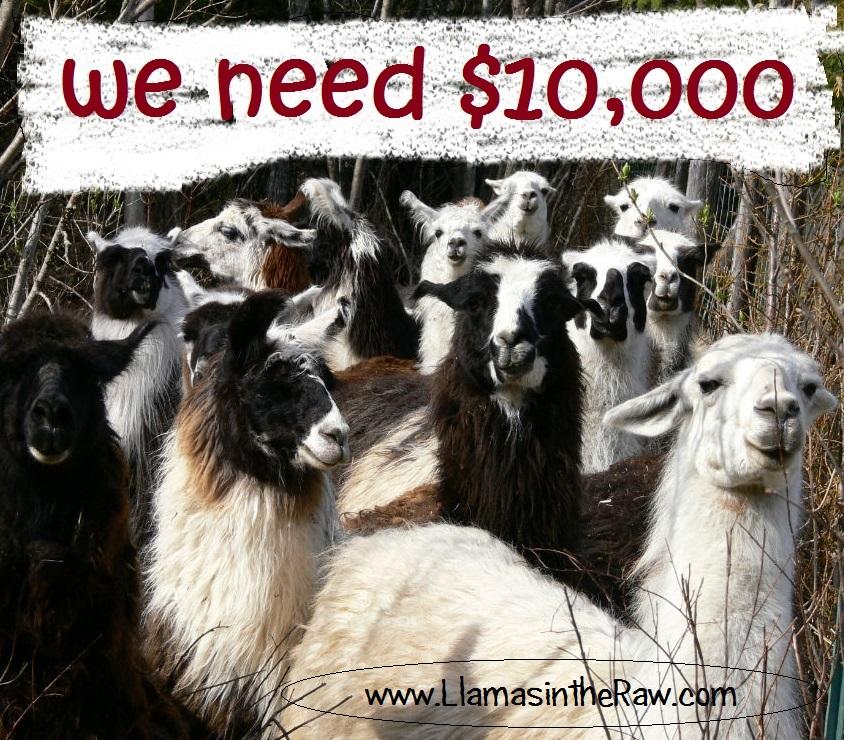 llama rescue fundraising