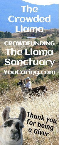 crowdfunding the llama sanctuary through fiber arts